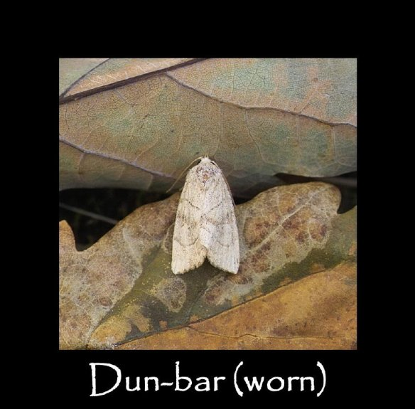 M Dun-bar ( worn ) (2)