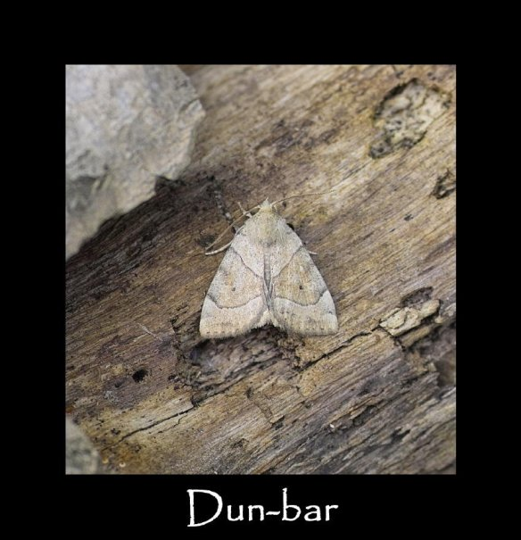 M Dun-bar