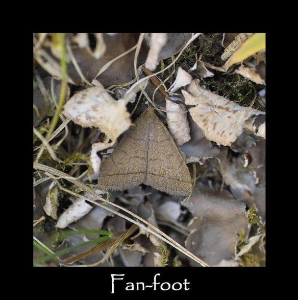 M Fan-foot