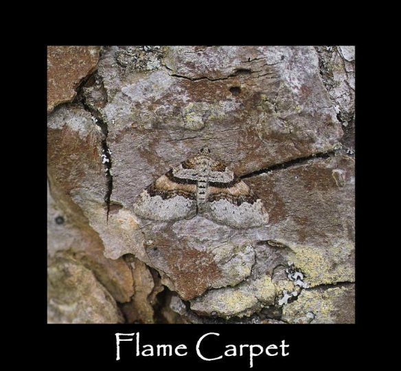 M Flame Carpet (2)