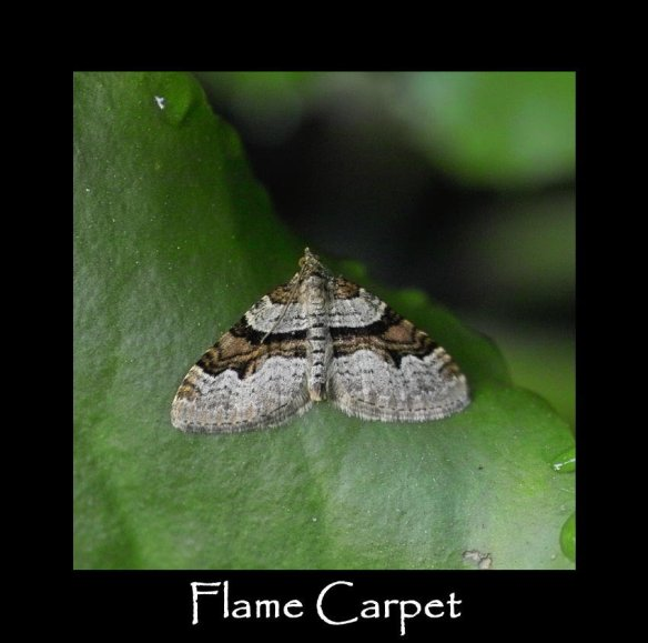 M Flame Carpet