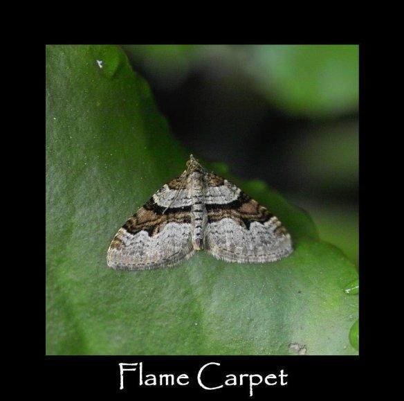 M Flame Carpet