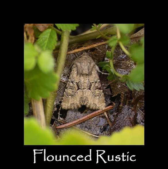 M Flounced Rustic (2)