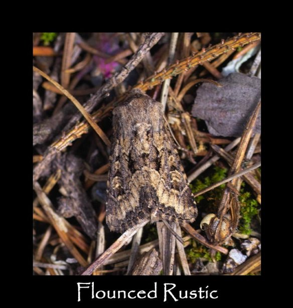 M Flounced Rustic 2