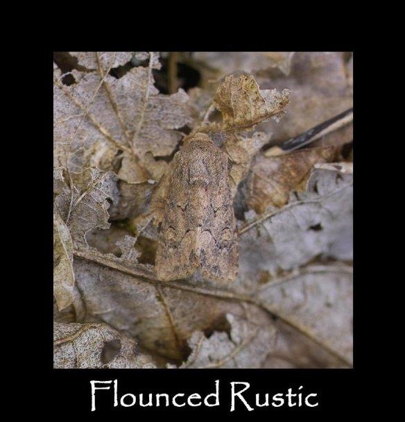 M Flounced Rustic