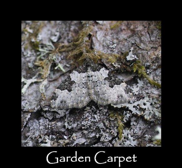 M Garden Carpet (2)