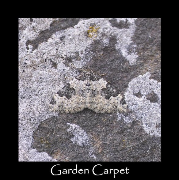M Garden Carpet