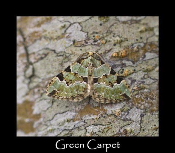 M Green Carpet (2)