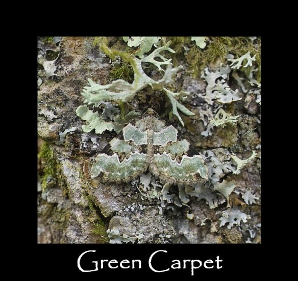 M Green Carpet