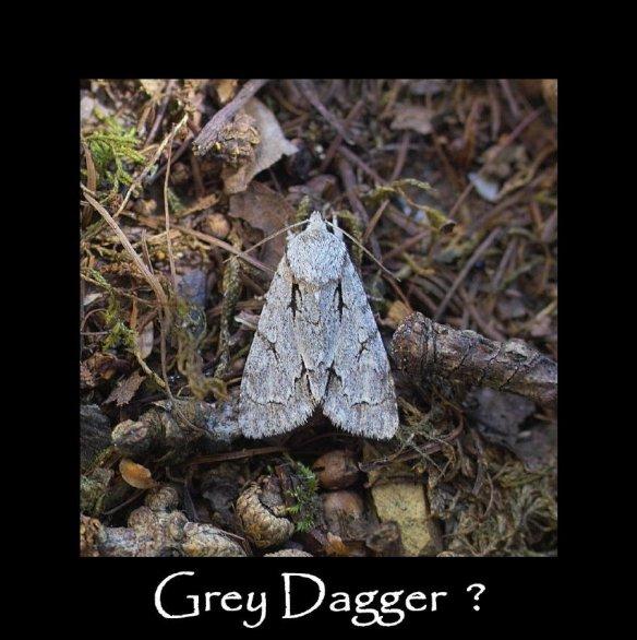M Grey Dagger (2)