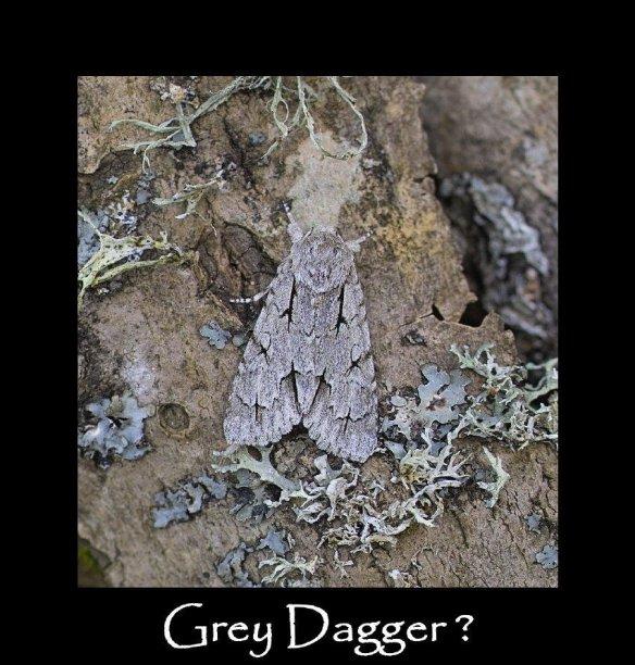 M Grey Dagger