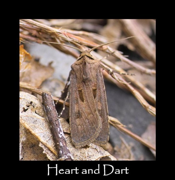 M Heart and Dart (2)