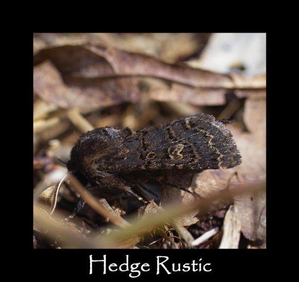M Hedge Rustic (3)