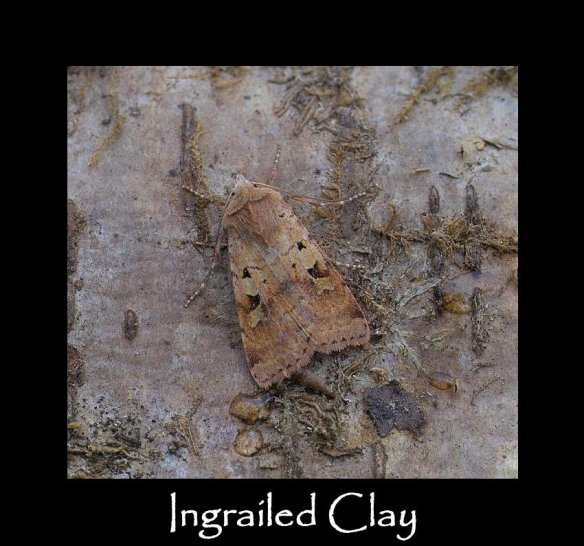 M Ingrailed Clay (2)