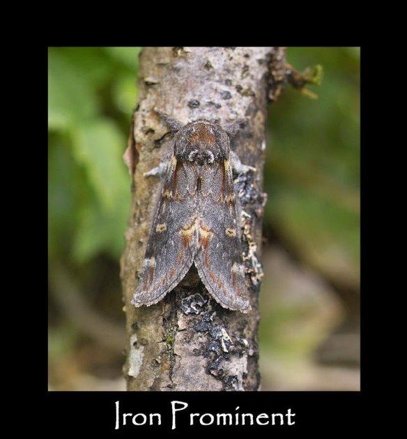 M Iron Prominent (2)