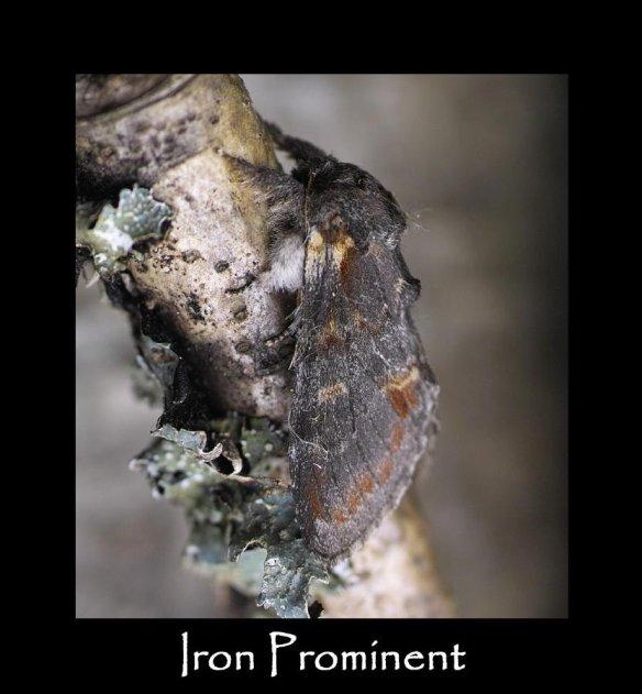 M Iron Prominent