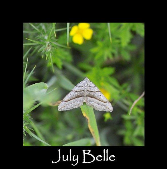 M July Belle