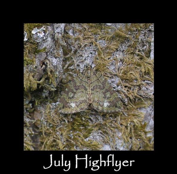 M July Highflyer (2)