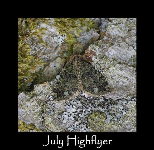 M July Highflyer