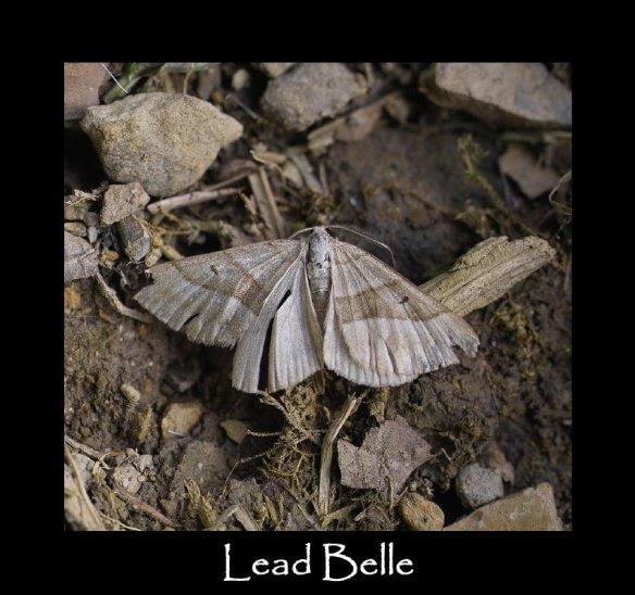M Lead Belle