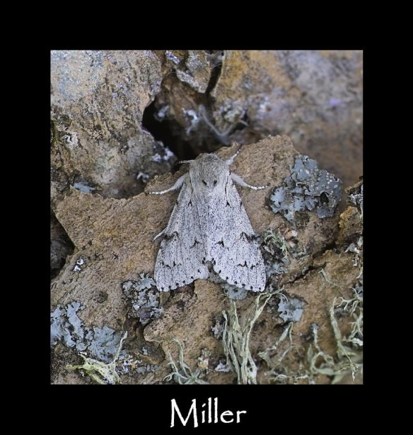 M Miller