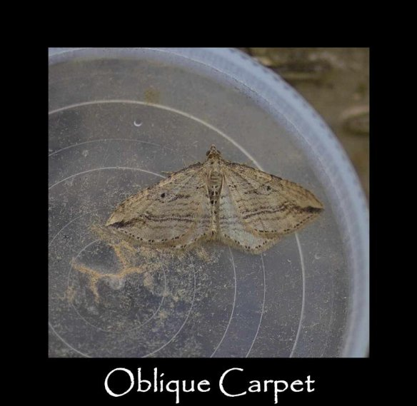 M Oblique Carpet 2 (2)