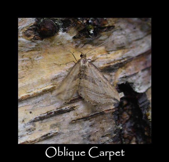 M Oblique Carpet (2)