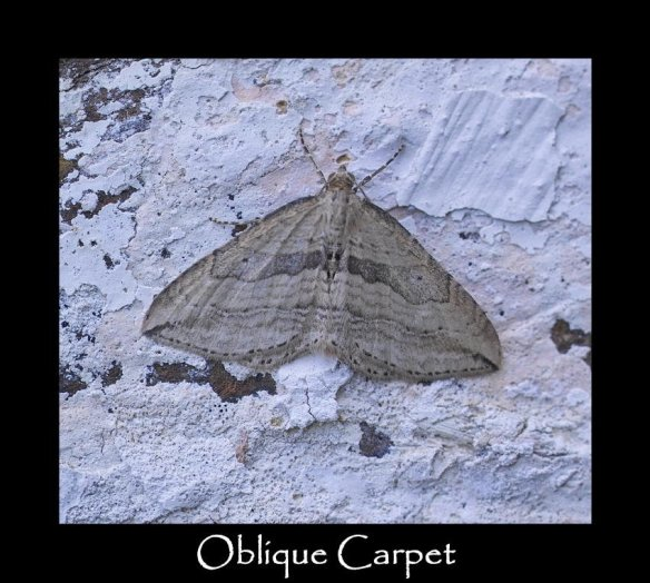 M Oblique Carpet