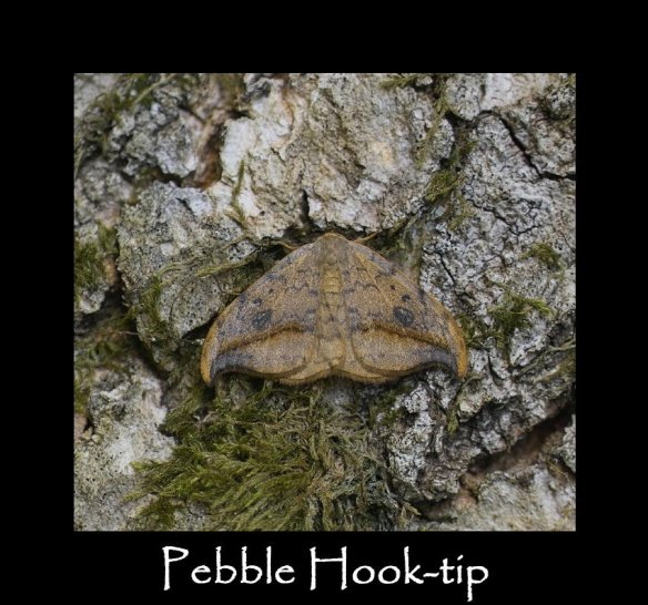 M Pebble Hook-tip