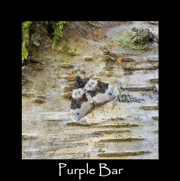 M Purple Bar (2)