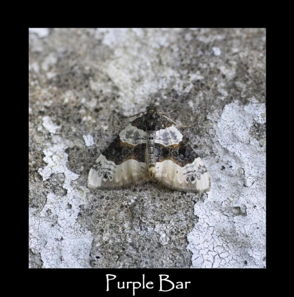 M Purple Bar