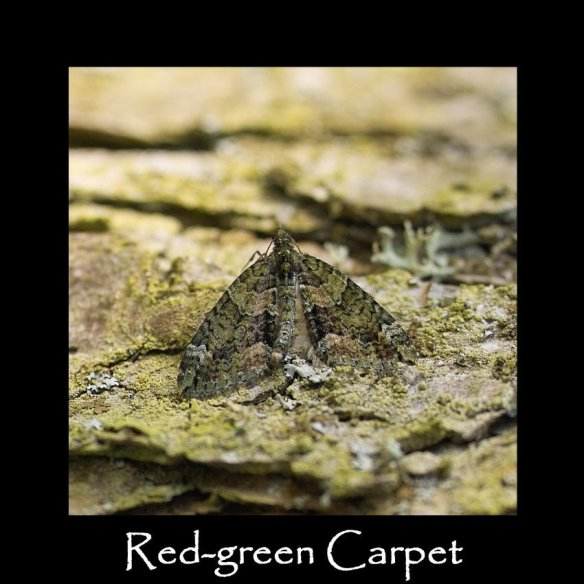 M Red-green Carpet