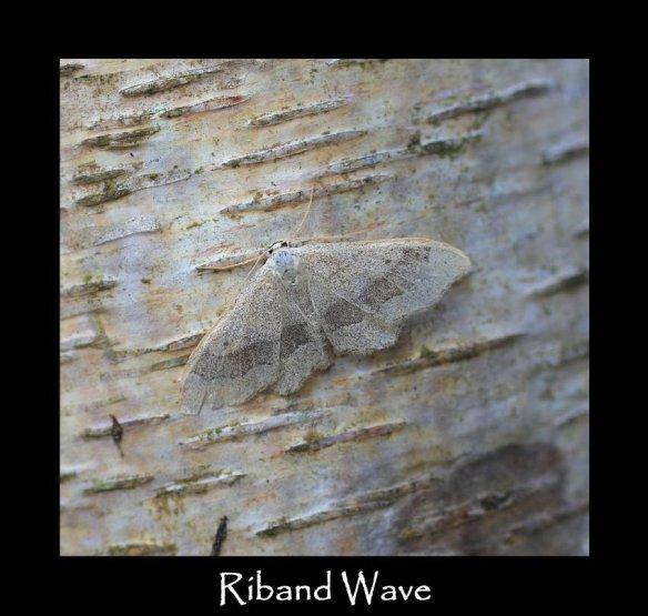 M Riband Wave 2 (2)