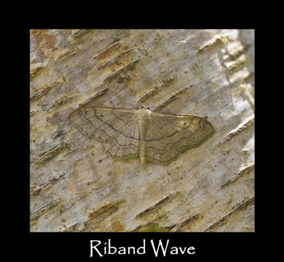 M Riband Wave 2