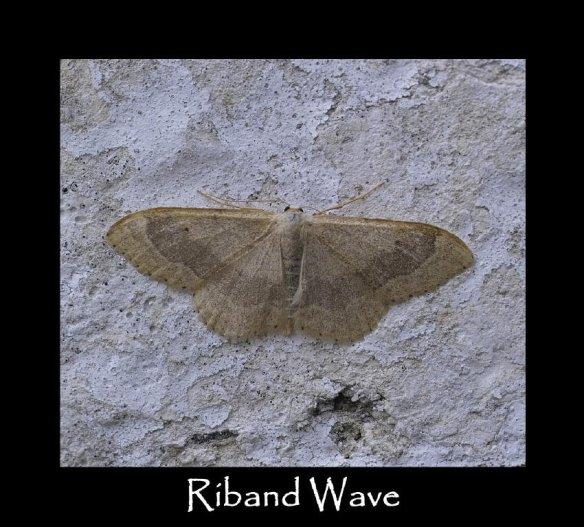 M Riband Wave 3