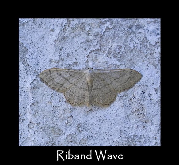 M Riband Wave