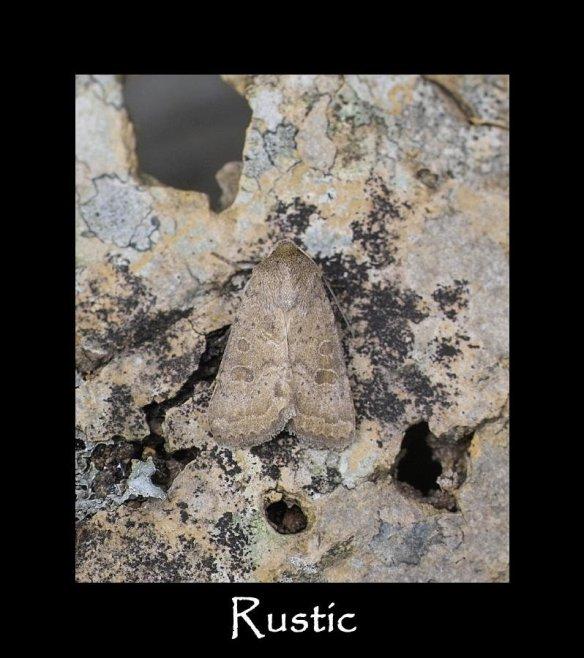 M Rustic