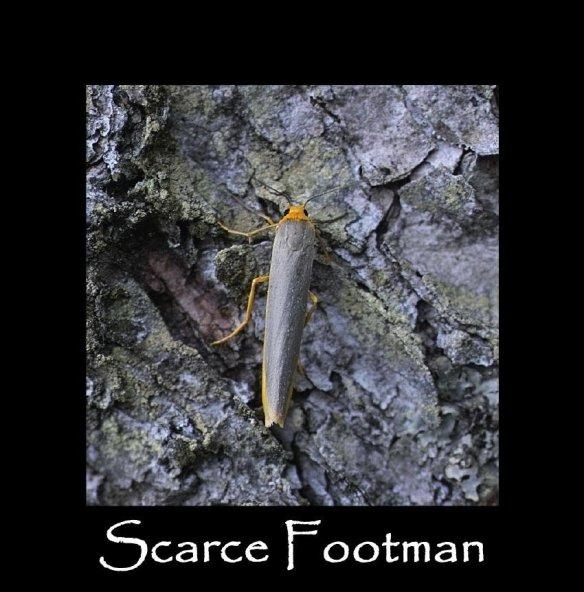 M Scarce Footman