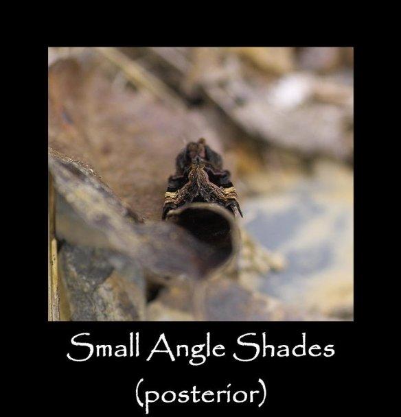 M Small Angle Shades (posterior)