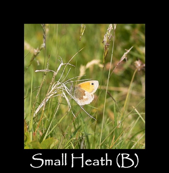 M Small Heath (B)
