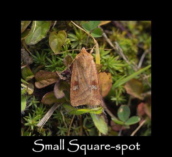 M Small Square-spot 2