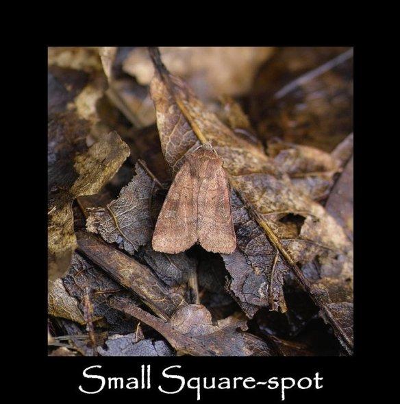 M Small Square-spot (2)