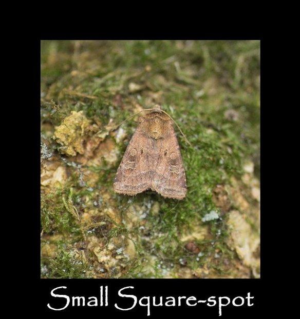 M Small Square-spot