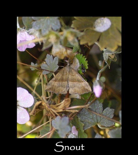 M Snout (2)