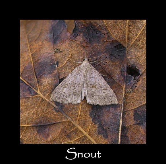 M Snout