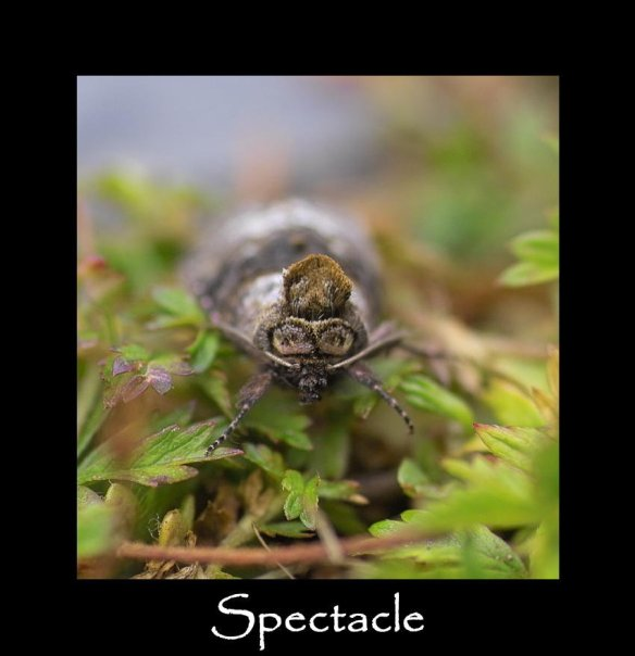 M Spectacle 2