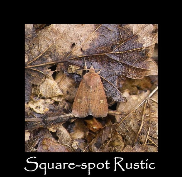 M Square-spot Rustic 2 (2)