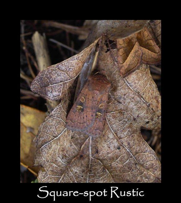 M Square-spot Rustic (2)