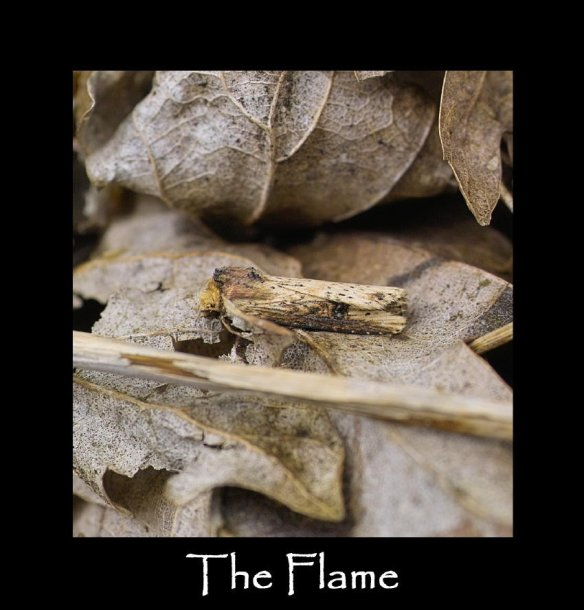 M The Flame