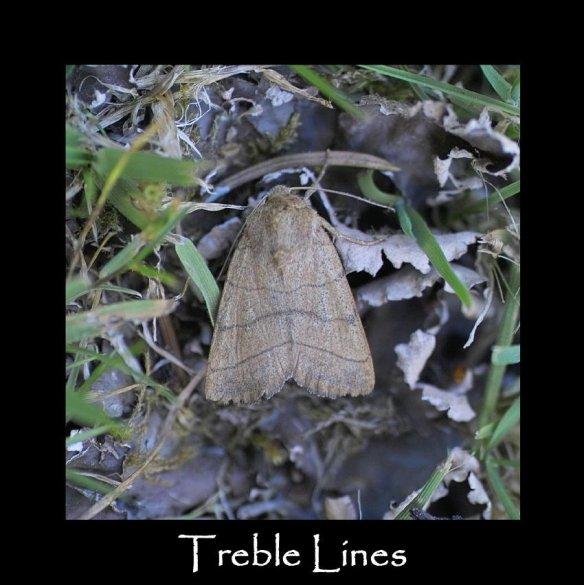 M Treble Lines